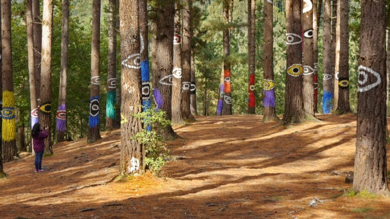 "Der ""bemalte Wald"" von Agustín Ibarrola im Bosque de Oma"