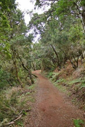 Wanderweg durch den Lorbeerwald