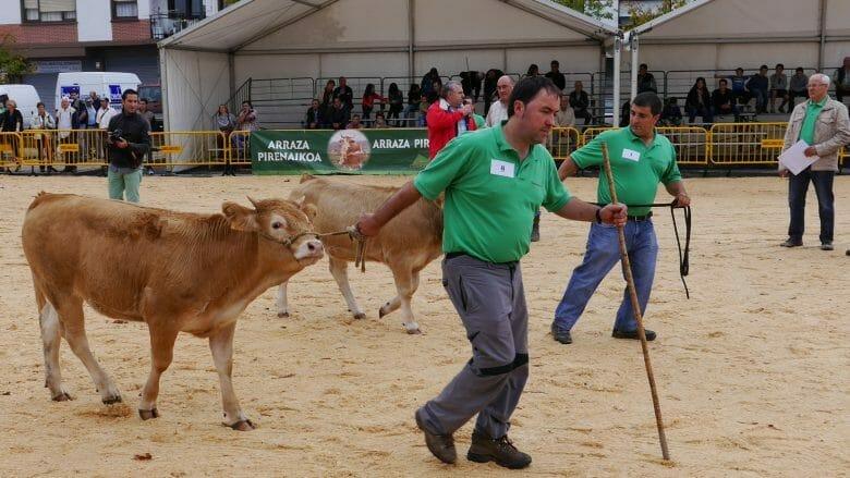 Viehmarkt in Gernika