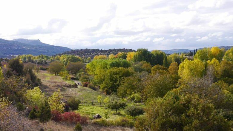 Mitte Oktober beginnt die herbstliche Verfärbung der Bäume