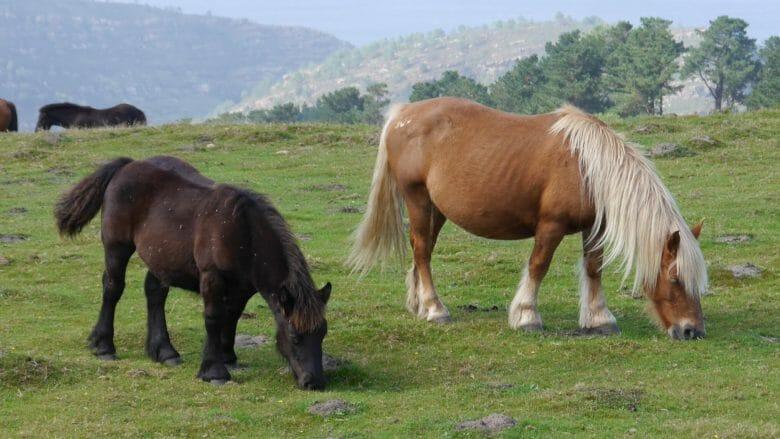 Pferde auf der Weide am Jaizkibel