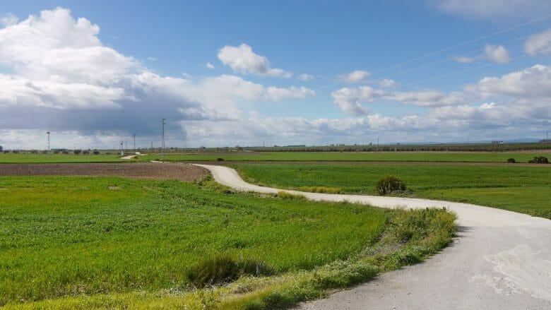 Grüne Felder in der Campiña der Provinz Sevilla