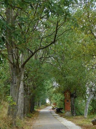 Camí del Montsacopa